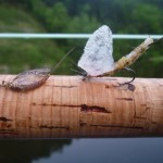 ダム湖の宿命と危険水位