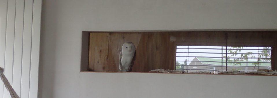 フクロウとの距離感